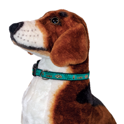 "Sandia Pet Dog Collar 10-16"" Teal"